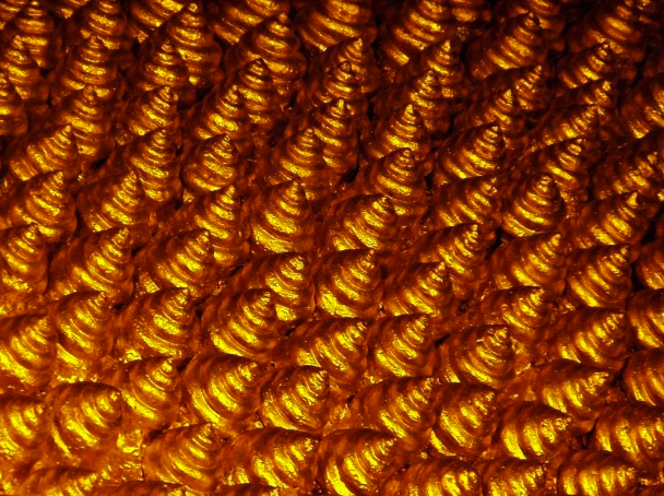 GoldSpiralShells2