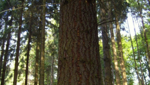 TreeTrunkSmaller