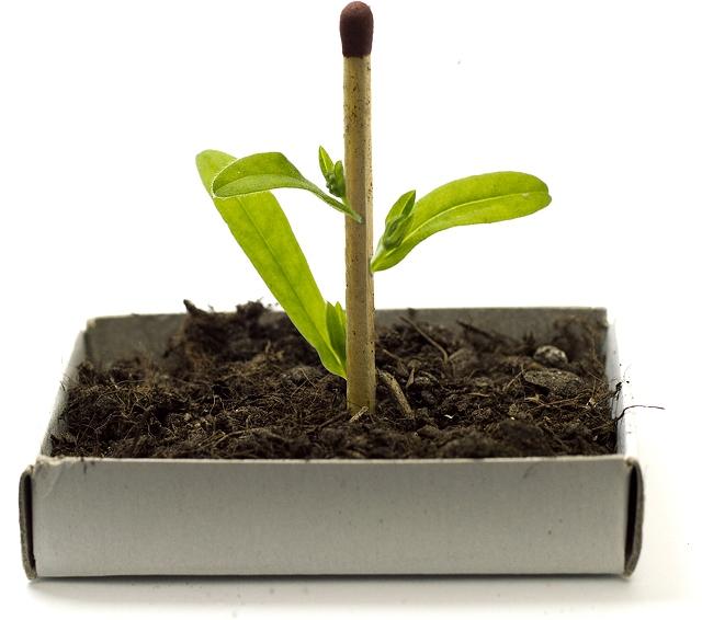 growingmatchstick